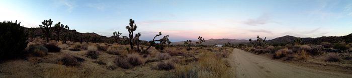 Joshua Tree iPhone Photo Diary